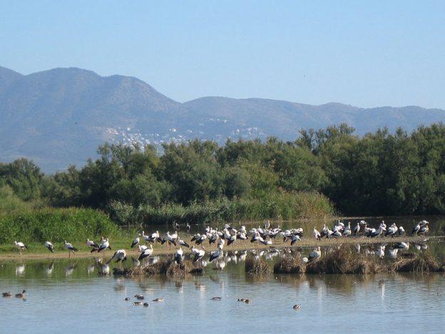 Wetlands Empordà