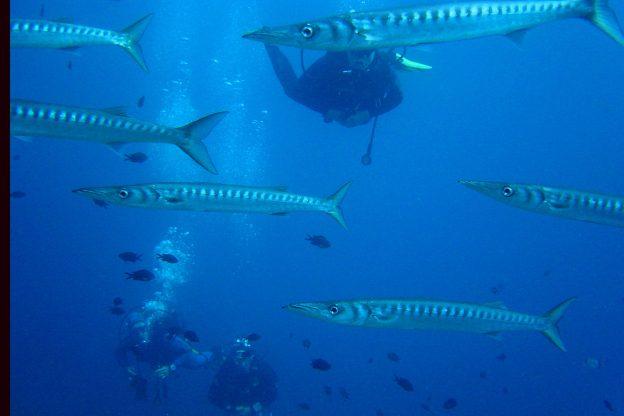 buceadores curso submarinismo