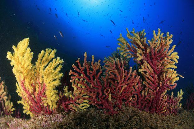 Centro Submarinismo Cala Montjoi Cap de Creus
